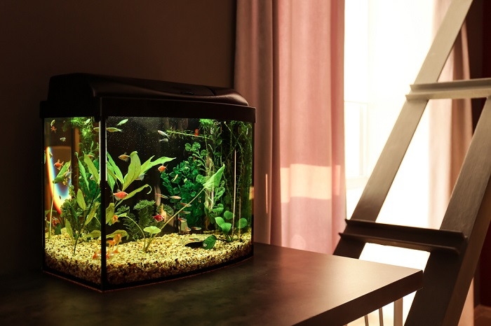 aquarium on table